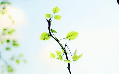 Za každý stratený strom vysadí mesto Žilina 12 nových